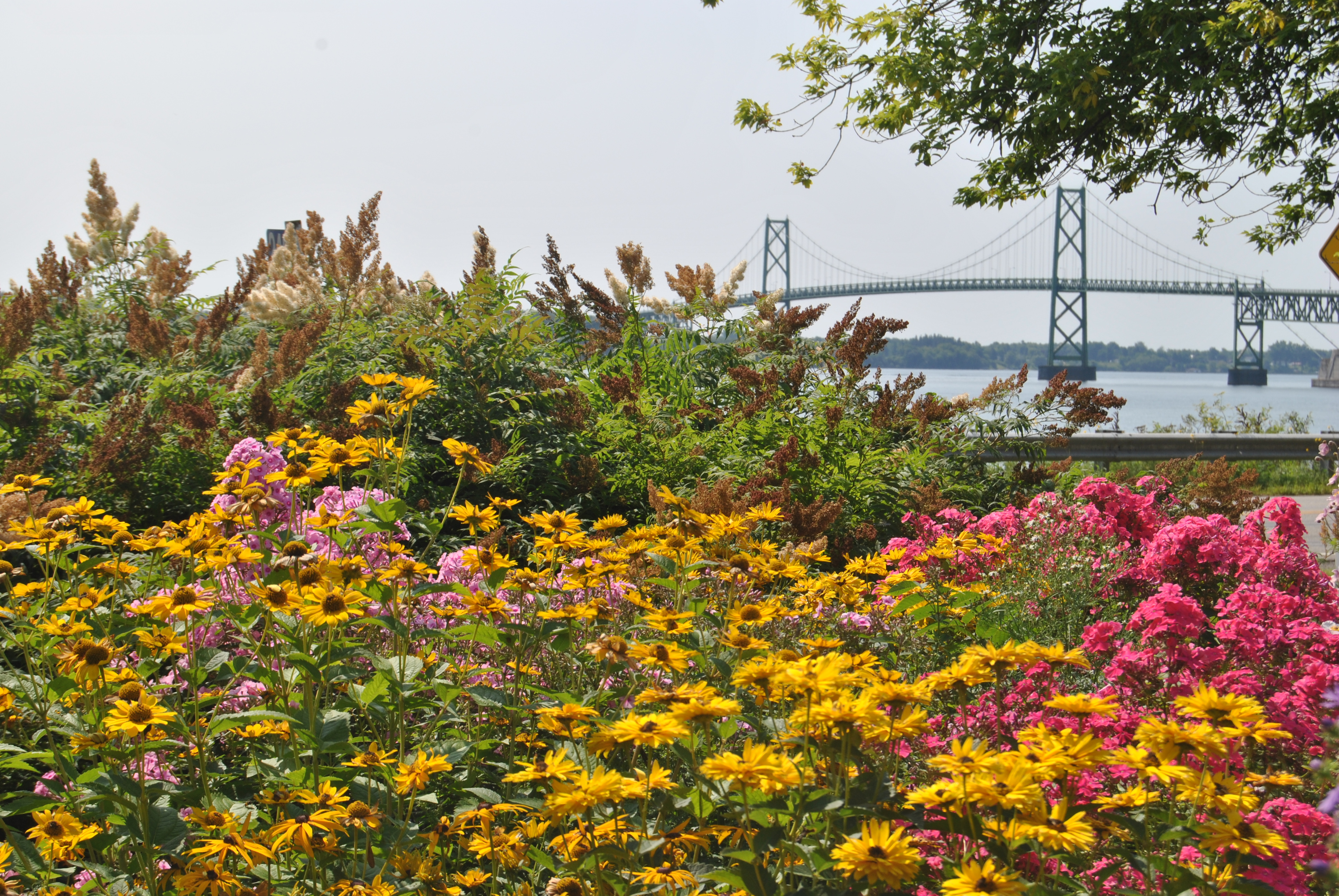 Flowers along the St. Lawrence River facing an international bridge